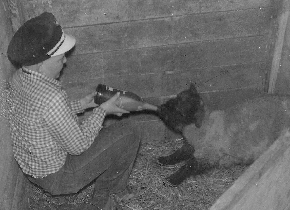#74=Ron Sletten feeding Cheeta, circa 1959