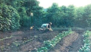 #138=Nathan playing trucks in garden; June 1987