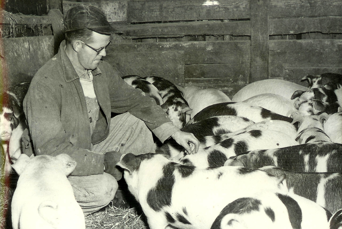 #28.1=Dad on TV commercial for Purina Hog Feed, early 1960's