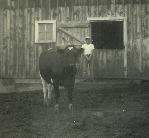 #160=Lowell and cow near barn; June 19, 1955