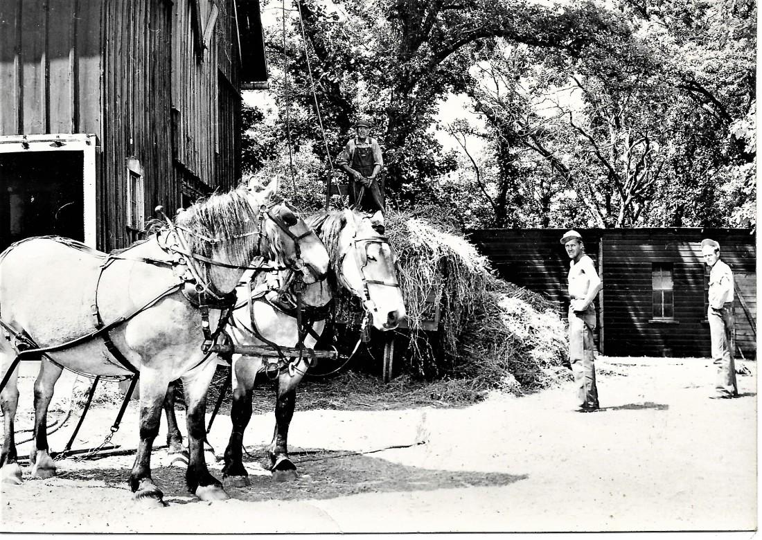 #969...1948 Haying Lake Mills Iowa Ed on haystack Erv and Doren